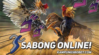 Photo of Sejarah Sabung Ayam Bangkok yang Superior